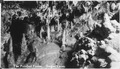 Indirect lighting (white) bringing out shadows made this effective. The Petrified Forest, Oregon Caves. - NARA - 298933.tif