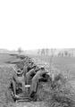 Infanterie während Manöver - CH-BAR - 3237876.tif