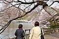 Inokashira Park 2009-04-05 (3446039347).jpg