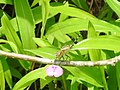 Insects from Madayipara DSCN2274.jpg