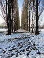 Inverno al parco di Correggio.jpg