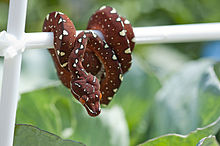 A Baby Green Tree Python by AsherCarson on DeviantArt