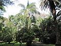 Jardim Botanico Tropical (14028506663).jpg