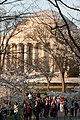 Jefferson Memorial through the cherry blossoms 001 - Washington DC - 2014-04-10 (13783350395).jpg