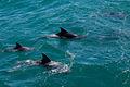 Jervis Bay Dolfins (3132449996).jpg