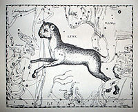 An old drawing depicting a lynx overlaying a chart of stars