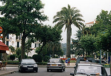 Coconut tree of about ten meters of height in urban areas on a roundabout cluttered car.