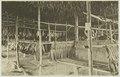 KITLV - 26864 - Kleingrothe, C.J. - Medan - Tobacco drying barn, Deli - circa 1905.tif