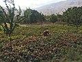 Kahmard, banaq village.jpg