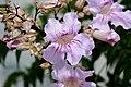 Kalimpong Flora and Fauna14.jpg