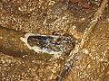 Kalktuff Unterhalb des Kalamari Katarakt 2.JPG
