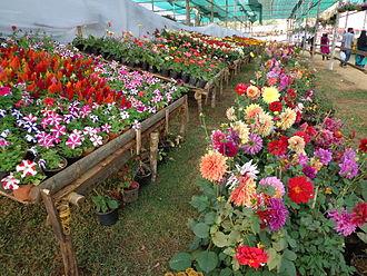 Kalpetta - Kalpetta Flower Show