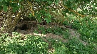 Endelave - Image: Kaninhuller på Endelave