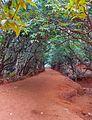 Kasturba Rd, Matheran, Maharashtra 410102, India - panoramio (10).jpg