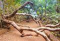 Kasturba Rd, Matheran, Maharashtra 410102, India - panoramio (22).jpg