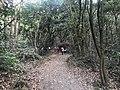 Kasuya Research Forest of Kyushu University 2.jpg