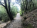 Kasuya Research Forest of Kyushu University 6.jpg