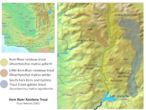 Golden trout - Image: Kern River Rainbow Range Map