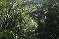 Khadimnagar Rain Forest Sylhet (8005265382).jpg