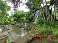Kolam Taman di IBC Pandaan (halaman belakang) - panoramio.jpg