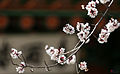 Korea Palace Spring Flowers 11.jpg