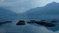 Kotorski zalijev fish farm.jpg
