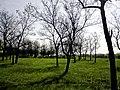 Krasnodons'kyi district, Luhans'ka oblast, Ukraine - panoramio (14).jpg