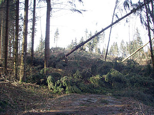 Disturbance (ecology) - Damages of storm Kyrill in Wittgenstein, Germany.