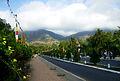 Lâm viên Núi Cấm.jpg