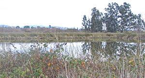 Laguna de Santa Rosa - Tule-edged pond for water polishing treatment of effluent from City of Santa Rosa sewage treatment, Laguna de Santa Rosa