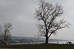 Lake Zurich - panoramio (56).jpg