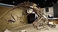 Lambeosaurus Royal Tyrrell 2.jpg