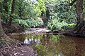 Lamorna Stream - geograph.org.uk - 43528.jpg