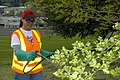 Landscape maintenance (3555200150).jpg