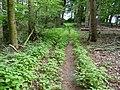 Landschaftsschutzgebiet Horstmanns Holz Melle -Waldausgang- Datei 1.jpg