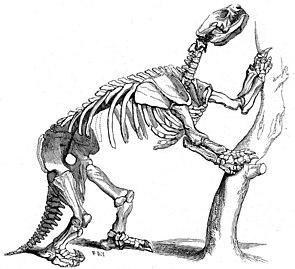 Alte Darstellung des Skeletts