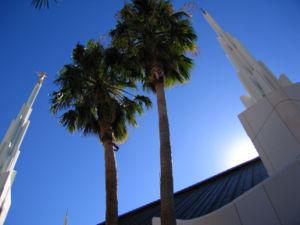 Sunrise Manor, Nevada - Palm trees are seen near the Las Vegas Temple in Sunrise Manor, Nevada