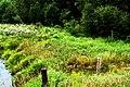 Late Summer Meadow (219052368).jpg