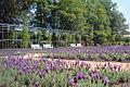 Lavendelgarten-Guetersloh.jpg