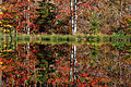 Lazy-autumn-mallard-reflection - Virginia - ForestWander.jpg