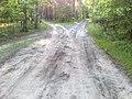 Leśne skrzyżowanie - panoramio.jpg