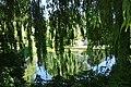 Le Havre (France), Salix × sepulcralis sin Saint-Roch garden.JPG