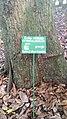 Le kolatier géant à deux tranches au JPN PORTO-NOVO-BENIN.jpg