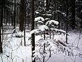 Le parc de la terre des jeunes - Victoriaville - Centre-du-Québec 26.JPG