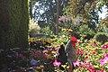 Le roi couronné du jardin des plantes - panoramio.jpg