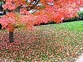Leaves in Churchyard.jpg