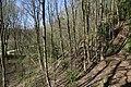 Leitenwälder der Isar 0641.jpg
