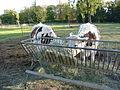 Les vaches parisiennes.jpg