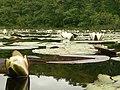 Lesny staw cd. - panoramio.jpg