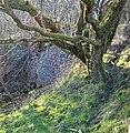 Lime kiln. Haggis Bank, Sorn, East Ayrshire.jpg